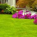 Де можна купити насіння газонної трави