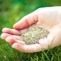 Які вибрати насіння газонної трави