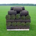 Плюси і мінуси рулонного газону