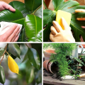 Догляд за рослиною