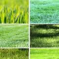 Види газонів