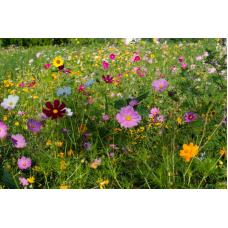 Декоративная цветочная смесь 50 г