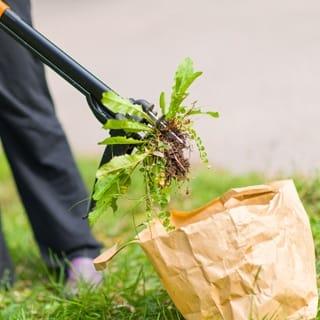 Убрать сорняки с газона