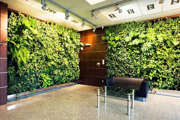 Озеленение офиса в Киеве